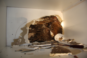Termites Damages to your house